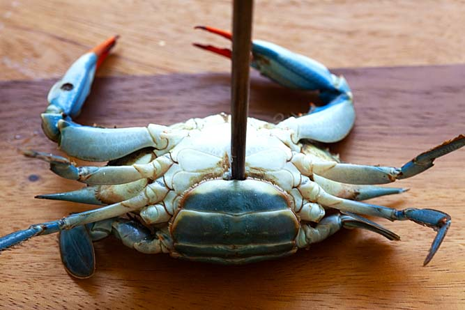 How to kill blue crab.
